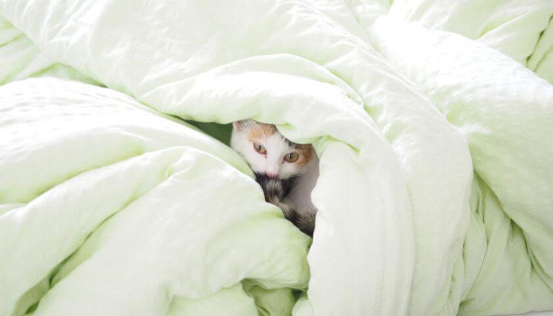 Bettfedernreinigung